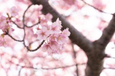 【穴場】愛知県のおすすめ桜スポット4選   ゆったり桜を鑑賞しましょう